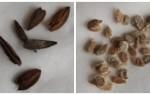 Как определить срок годности семян и подготовить их к посадке