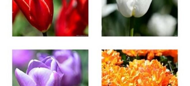 Парад тюльпанов — видеопрогулка по Никитскому ботаническому саду