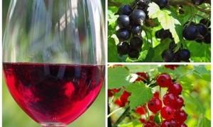 Вино из смородины — очень вкусное по очень легкому рецепту