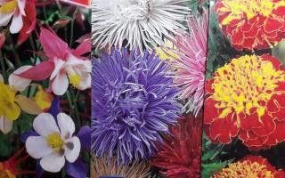 Посев под зиму: плюсы и минусы