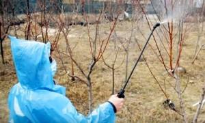 Весенняя обработка сада: четыре этапа