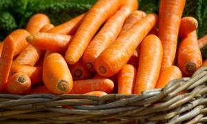 Как вырастить морковь, чтобы получить хороший урожай