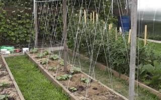 Способы подвязки огурцов  в открытом грунте