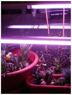 лампа для рассады люминесцентная